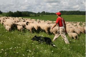 Рабочий по уходу за скотом/работник фермы